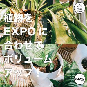 EXPO植物ボリュームアップ